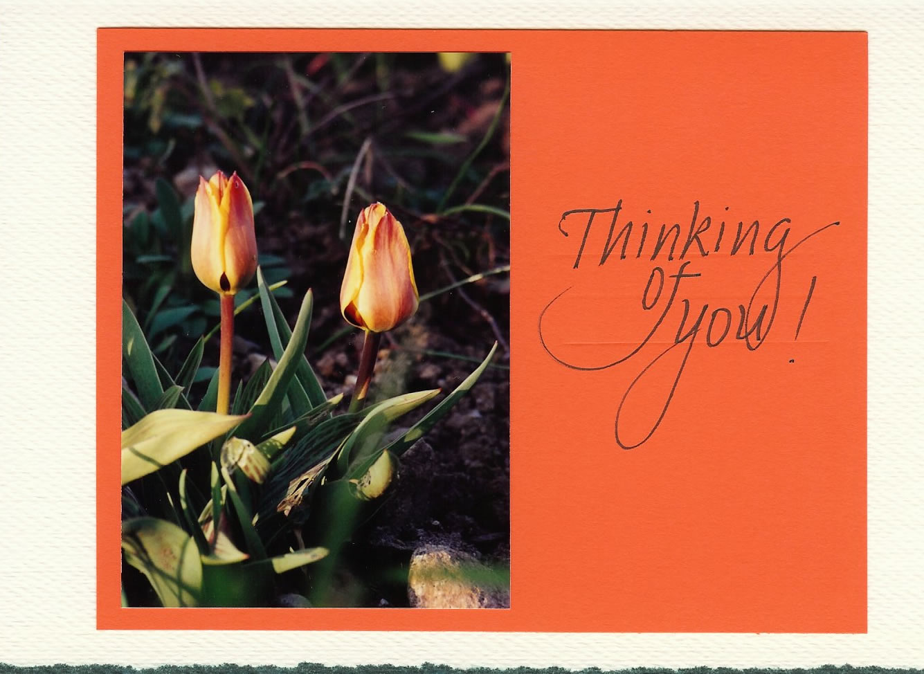 Patricia Williams (think of you card)